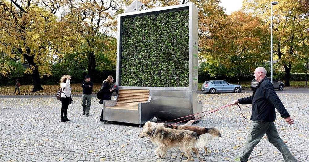 На улицах городов появились необычные скамейки, на которых растёт мох. И их полезность сложно переоценить
