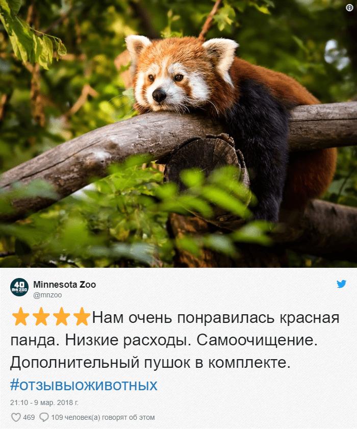20-1 Зоопарки пишут о своих животных отзывы в стиле сайта Amazon. Получилось очень забавно, 5 из 5