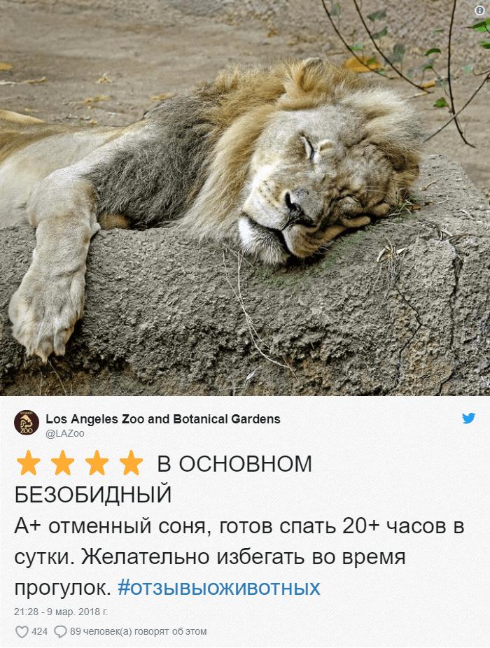 21 Зоопарки пишут о своих животных отзывы в стиле сайта Amazon. Получилось очень забавно, 5 из 5