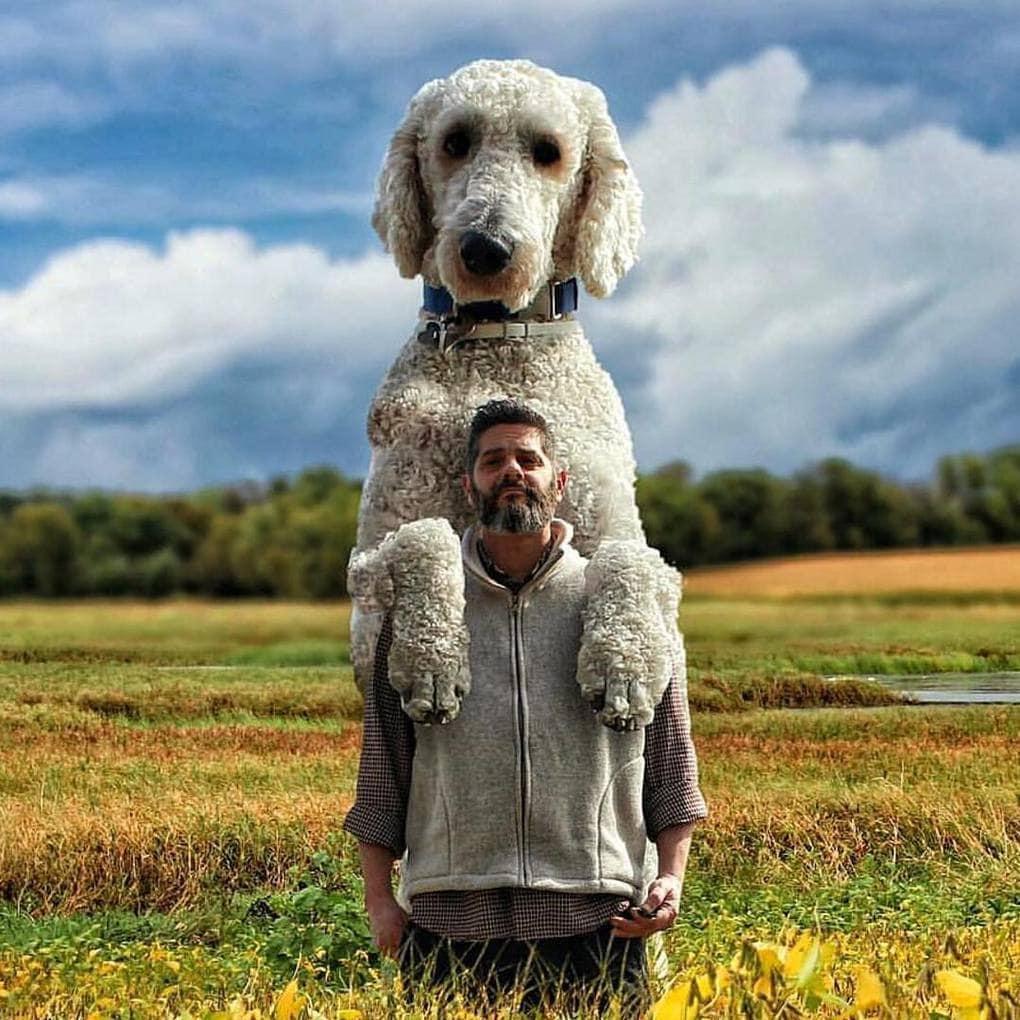 всех, странные картинки с собаками если вас обслуженный