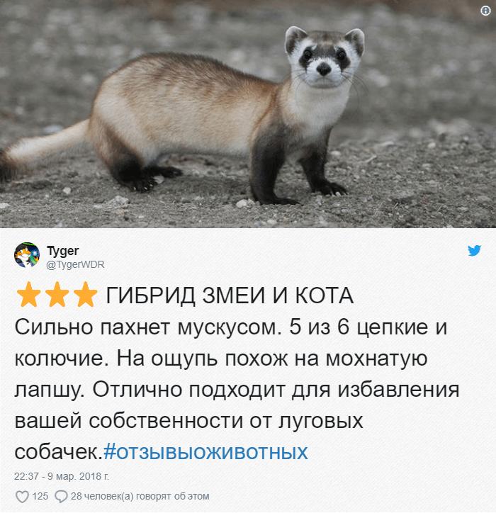 22 Зоопарки пишут о своих животных отзывы в стиле сайта Amazon. Получилось очень забавно, 5 из 5
