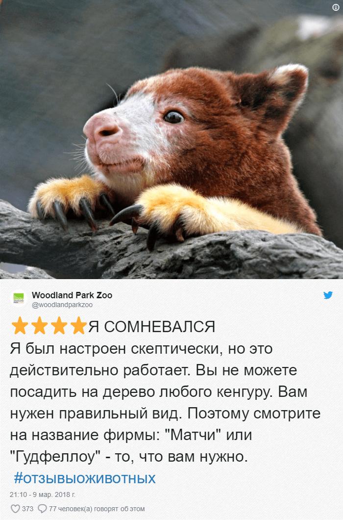 25 Зоопарки пишут о своих животных отзывы в стиле сайта Amazon. Получилось очень забавно, 5 из 5