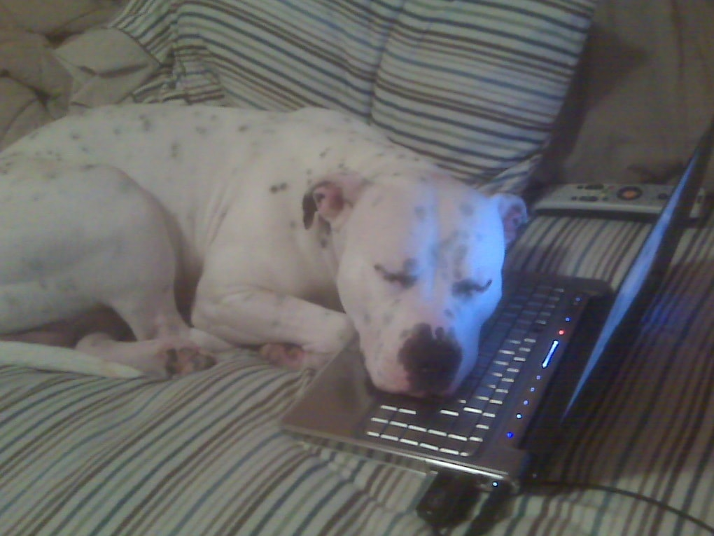 4zd7y - 18 крутых фотографий собак, которые вкупе с комментариями их владельцев делают интернет ещё прекраснее