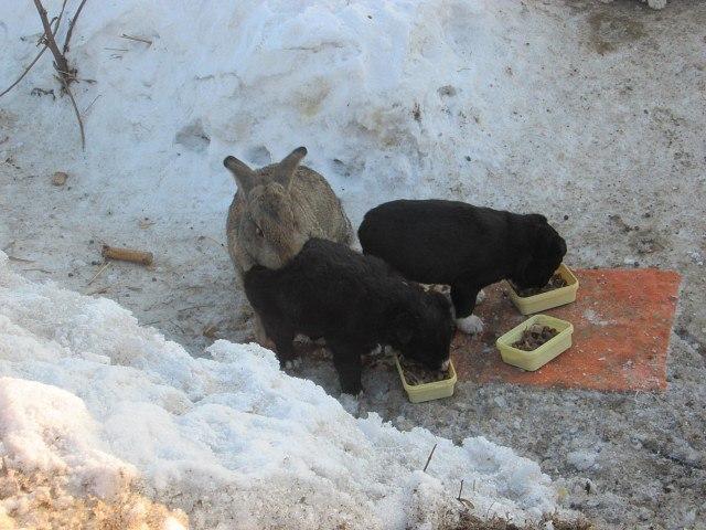 5psbbyybf4i - Этот ушастый товарищ доказал, что кролик — это не только ценный мех, но и героический спасатель. Для щенков