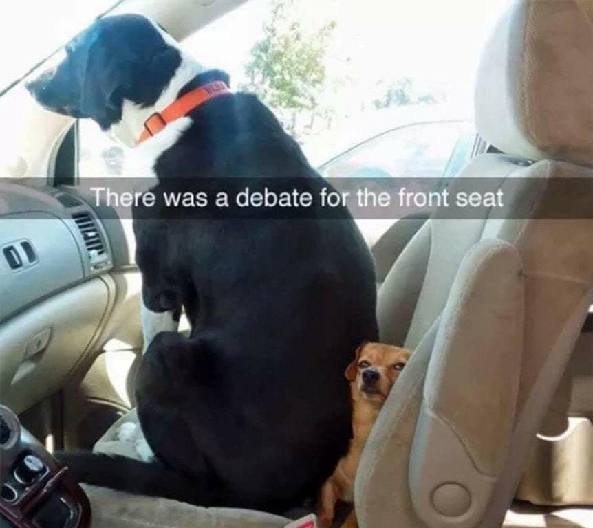 aullo9etqrcz846ooyhymeqem0phejer6tbh2wiab0 - 18 крутых фотографий собак, которые вкупе с комментариями их владельцев делают интернет ещё прекраснее