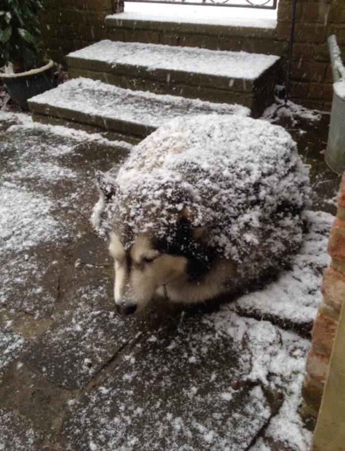 dxigcudw0aalvju - 18 крутых фотографий собак, которые вкупе с комментариями их владельцев делают интернет ещё прекраснее