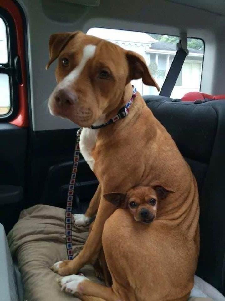 esdnqah - 18 крутых фотографий собак, которые вкупе с комментариями их владельцев делают интернет ещё прекраснее