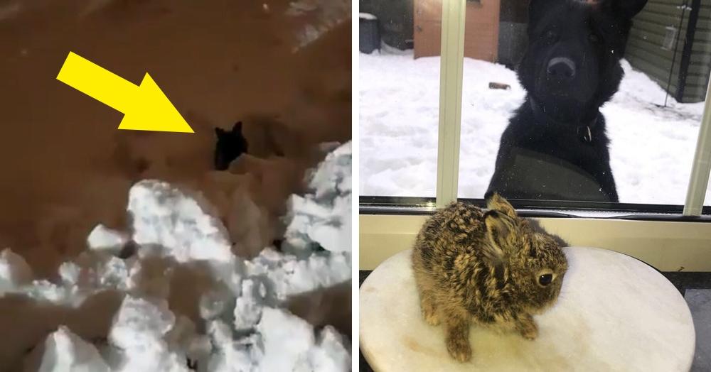 В аэропорту Дублина спасли замерзающего зайчонка и выложили видео с ним в твиттер. Зайка так понравился пользователям, что теперь за его судьбой следят тысячи зрителей