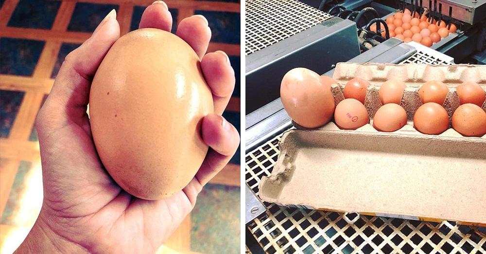 Фермер удивился, когда обнаружил куриное яйцо, которое было в три раза больше обычного. И удивился ещё раз, когда разбил его и обнаружил, как богат его внутренний мир