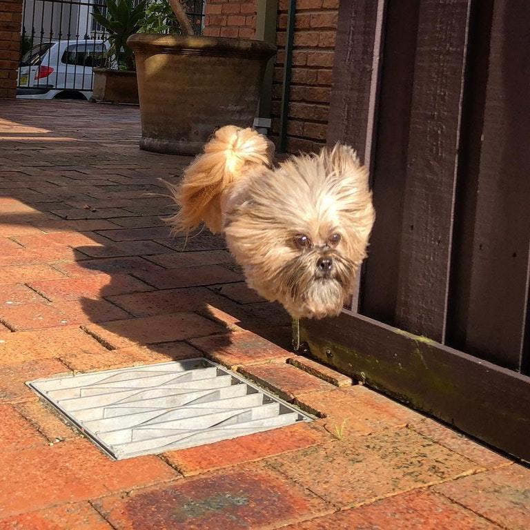 i98a5jigyxxbkl5metxt gcu2qzrlgc4son5zfe26wo - 18 крутых фотографий собак, которые вкупе с комментариями их владельцев делают интернет ещё прекраснее