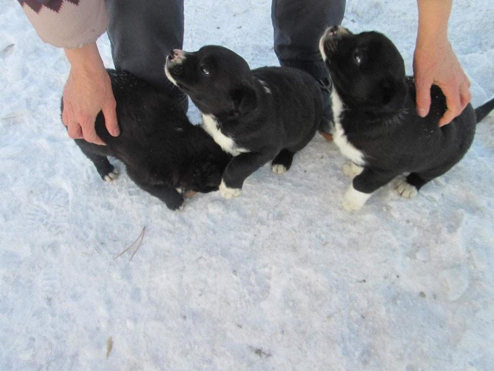 m k082gqbky - Этот ушастый товарищ доказал, что кролик — это не только ценный мех, но и героический спасатель. Для щенков