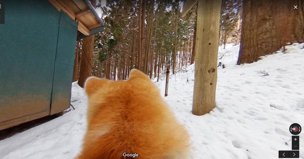 На панорамах Google появилась возможность побродить по виртуальным картам, глядя на город глазами собаки. Вид непривычный, но интересный!