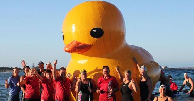 Гигантская резиновая утка должна была стать звездой соревнований по плаванию, но сбежала при первой удобной возможности и отправилась в путешествие