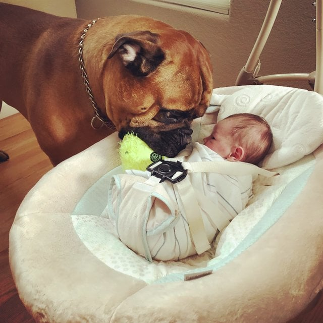 tmg article tall 7 1 - Этот пёс очень любил свой мяч, но однажды добровольно с ним расстался. Хозяева не ожидали такого поступка