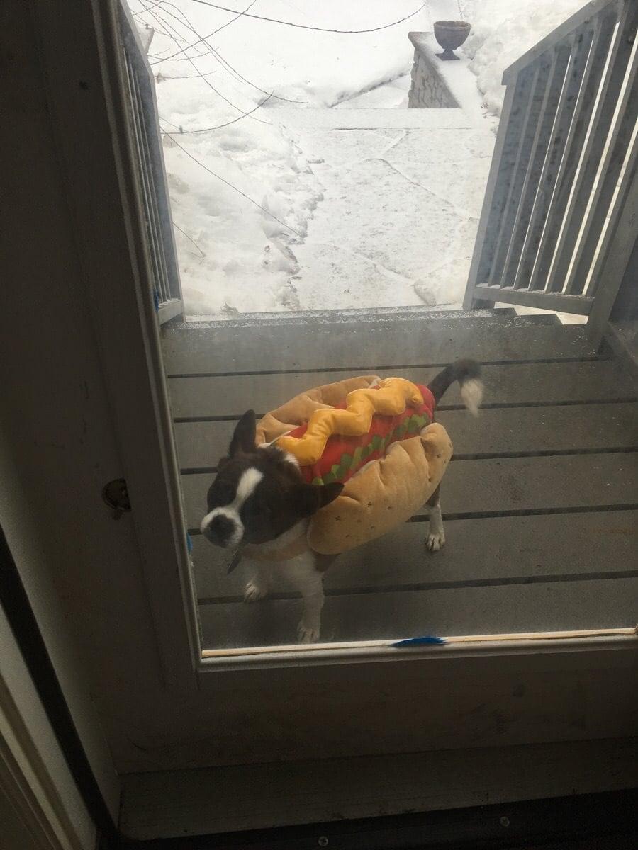 uoby31m - 18 крутых фотографий собак, которые вкупе с комментариями их владельцев делают интернет ещё прекраснее