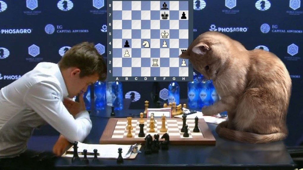 юморные фото про шахматы если верите мне