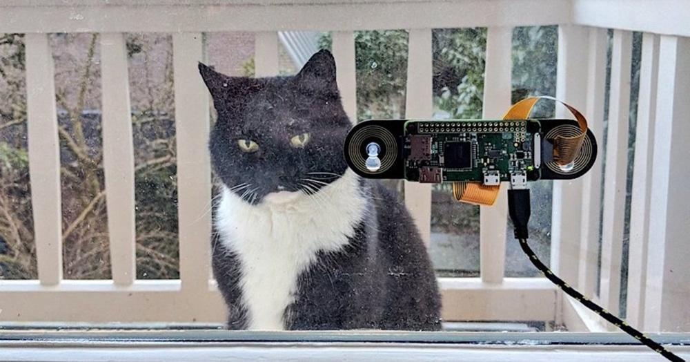 Программист придумал систему, которая из сотни других котов узнаёт именно его питомца, чтобы впустить домой. Его кот доволен. Чужие коты негодуют