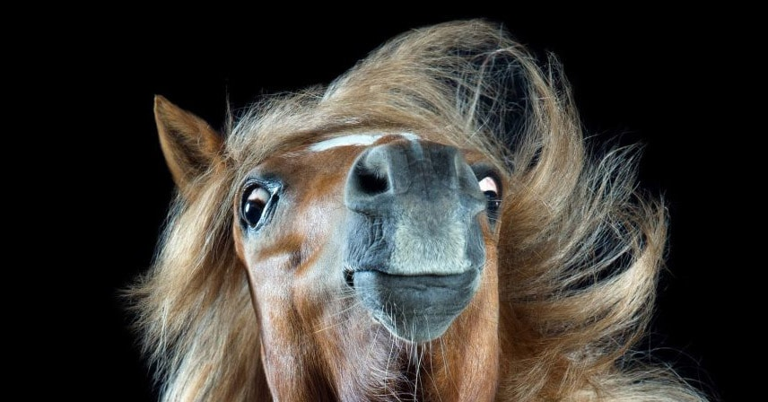 Немецкий фотограф делает крутые снимки лошадей, раскрывая их душу. А от их причёсок голова кругом
