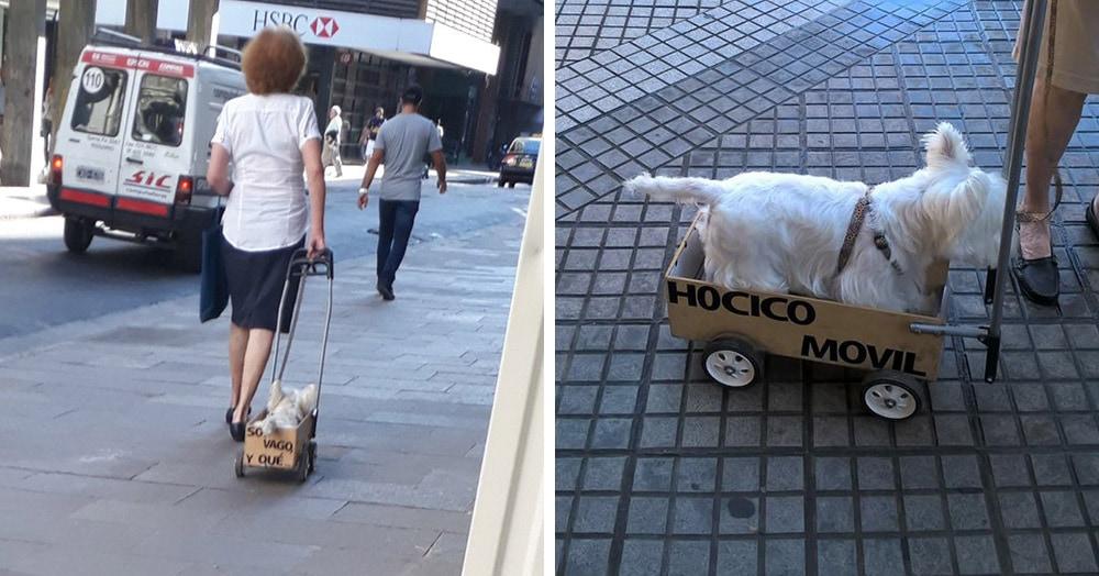 Прохожие думали, что этот пёс стар или болен, но хозяйка возит его в тележке по совсем иной причине
