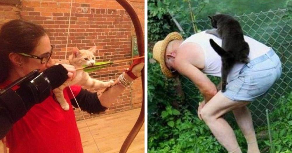 15 котов, которым обязательно нужно знать, какой очередной ерундой занимается их человек