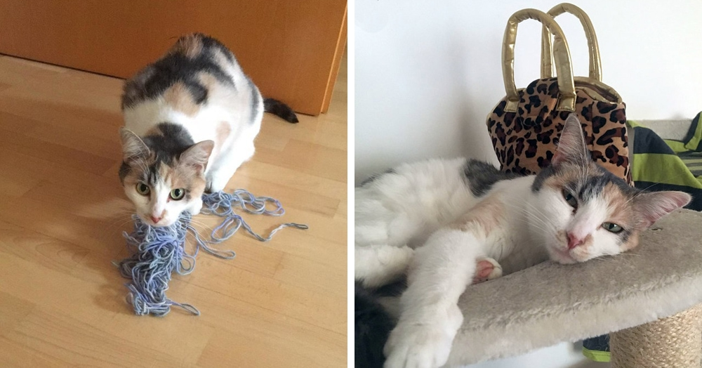 Хозяева посмеялись, когда их кошка украла чужой носок. Но когда она принесла сумку, стало уже не смешно