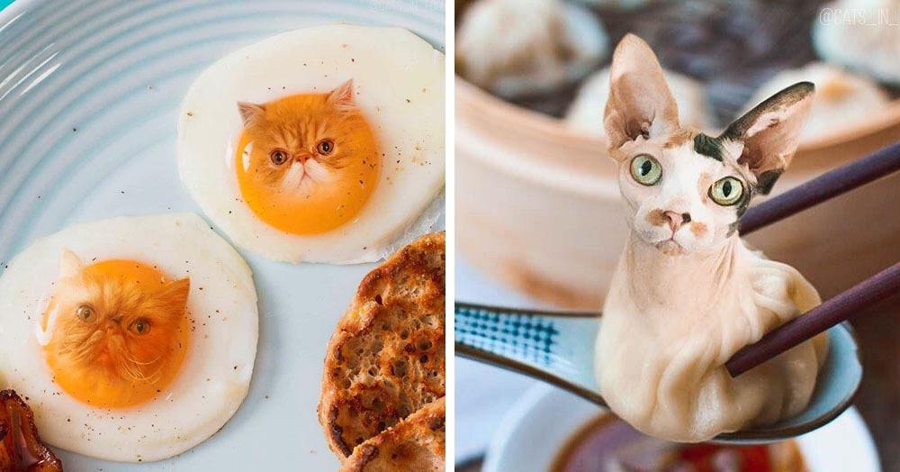 «Официант, у меня в еде котик!» — девушка добавляет котов в еду с помощью фотошопа. Странно, но весело