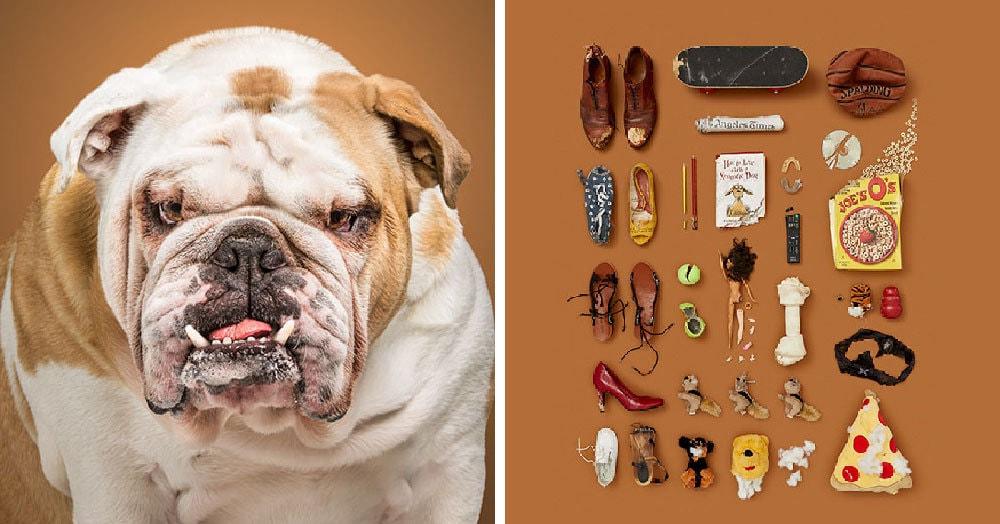 Чтобы показать, чем живут эти собаки, фотограф собрала предметы, которые их окружают