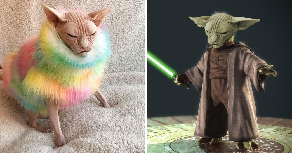 Суровый кот в пушистой жилетке оказался в эпицентре битвы фотошоперов. И ему это явно не по нраву