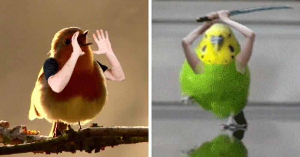 20 пернатых гифок, которые доказывают, что птицы были бы куда круче, если бы у них были руки