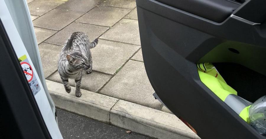 Мужчина ехал домой на машине и случайно встретил своего кота. Реакция питомца бесценна