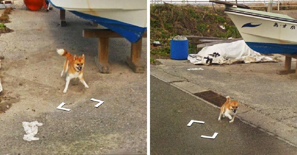 Пёс устроил забавную погоню за машиной Google Street View и «испортил» собой каждый кадр