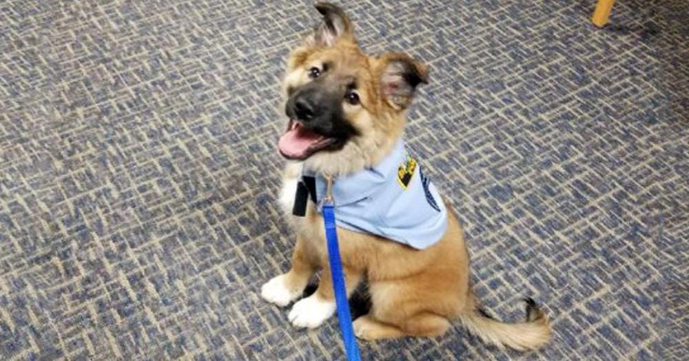Полиция спасла щенка, и он оказался так хорош, что для него придумали особую должность