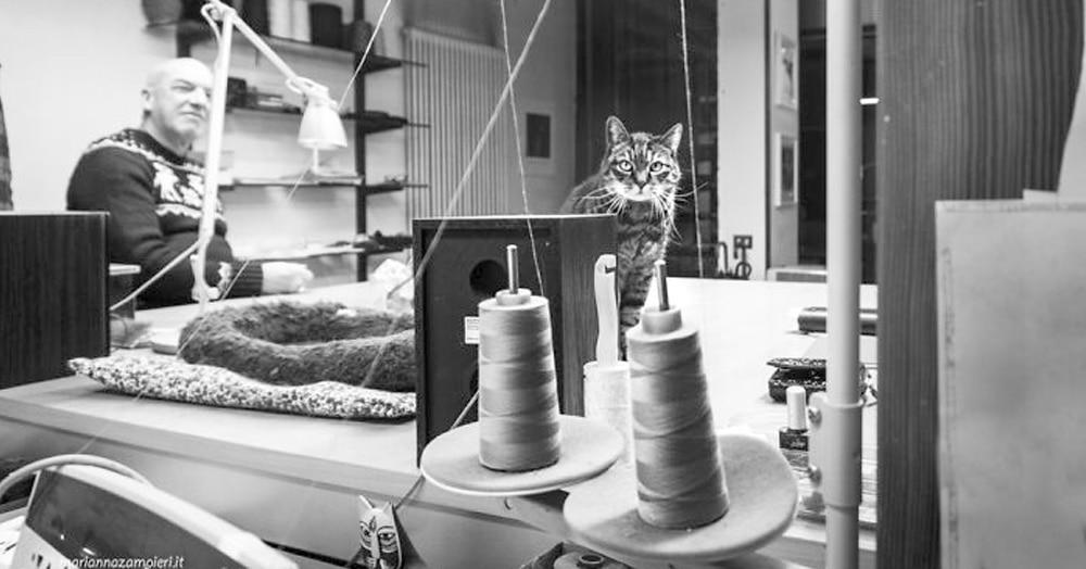 Фотограф делает снимки котов, которых люди завели на работе. Только взгляните на эти деловые морды!