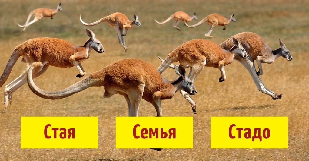 Тест: Знаете ли вы названия групп животных?