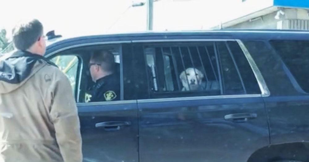 Этот пёс сбежал из дома, напал на оленя и был арестован полицией. Но его морда не знает сожаления