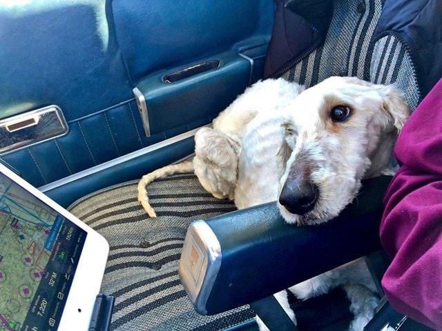 tmg article tall 2 - Эта собака была очень тощей и лохматой, но под грудой шерсти пряталась настоящая милашка