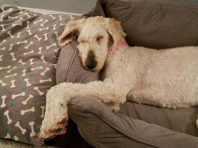 tmg article tall 5 - Эта собака была очень тощей и лохматой, но под грудой шерсти пряталась настоящая милашка