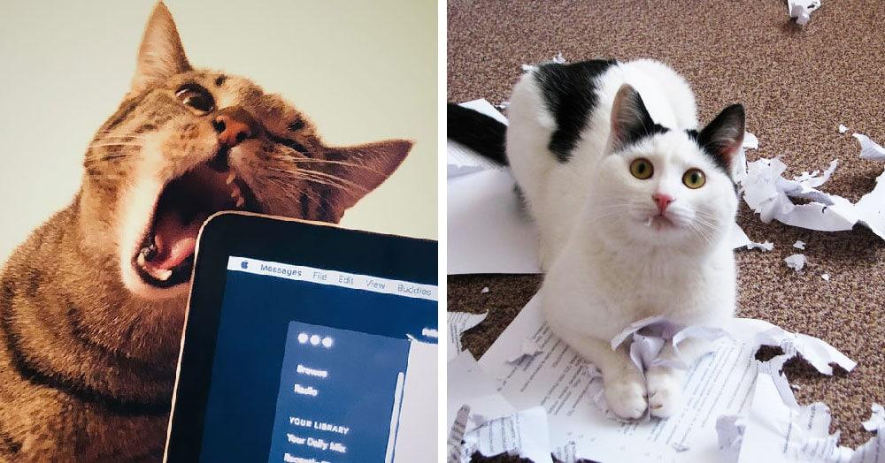Пользователи сети поделились очередными доказательствами того, что коты — те ещё негодяи