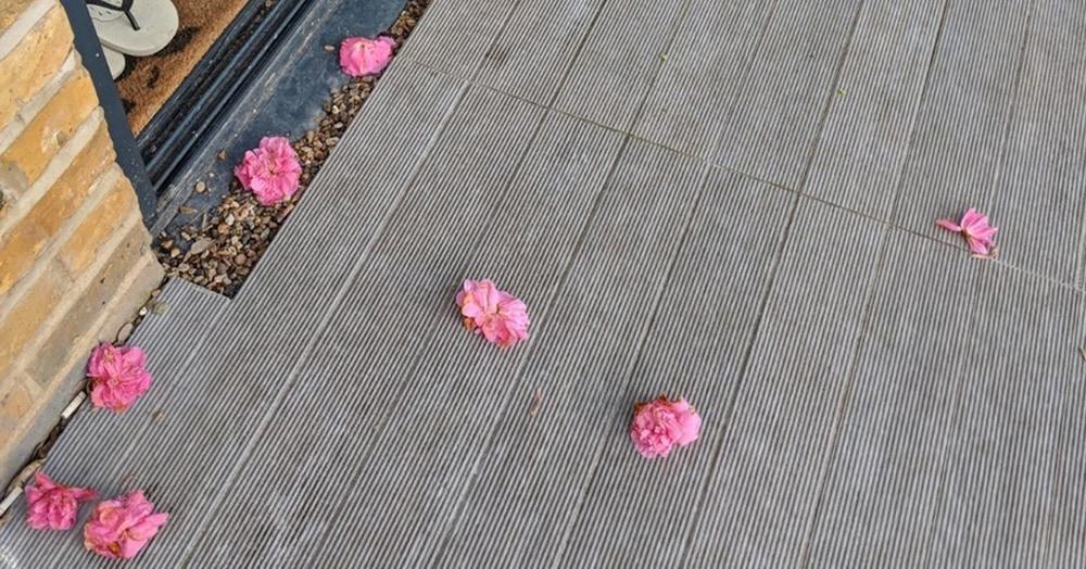 Женщина не догадывалась, что за тайный поклонник ежедневно приносит цветы. Пока не поймала его с поличным