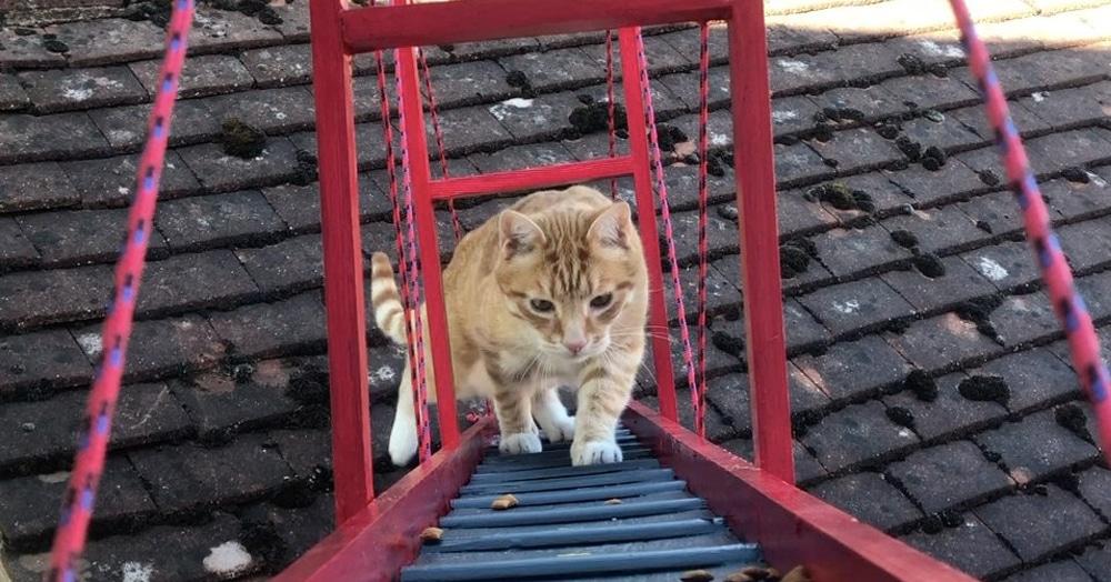 Чтобы кот не упал, прыгая из окна, хозяин построил ему мост. Но не простой, а кошачью версию Золотых Ворот