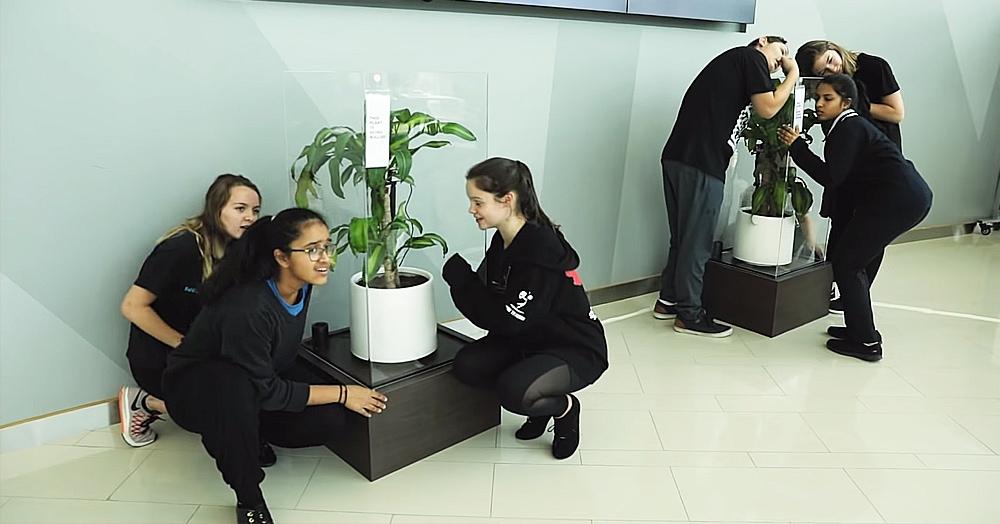 В этом эксперименте участвовали два растения: одно из них хвалили, другое ругали. Результат налицо