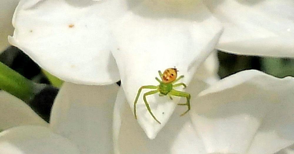 Японка запечатлела на камеру необычного паука с забавным рисунком, который сильно кого-то напоминает