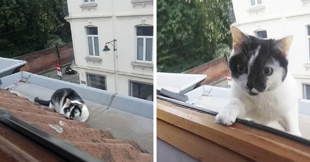 Эта кошка не хотела слезать с крыши, и хозяин придумал хитрый способ вернуть её домой, не беря на руки
