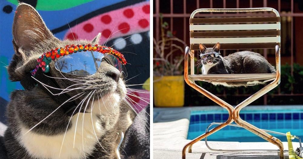 У этой кошки в солнечных очках редкое заболевание, но она слишком крута, чтобы замечать такие мелочи