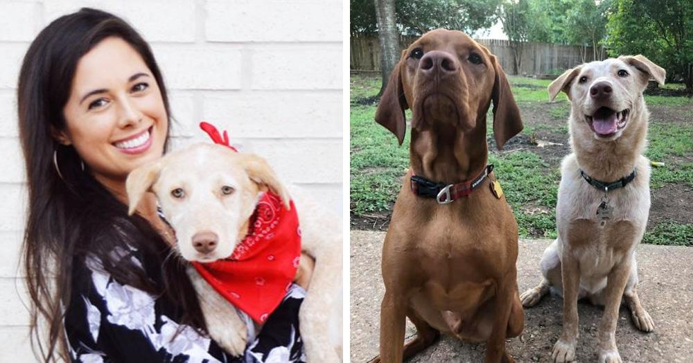 Две собаки не могли жить друг без друга и каждый день рыли подкоп. Хозяевам пришлось выкручиваться