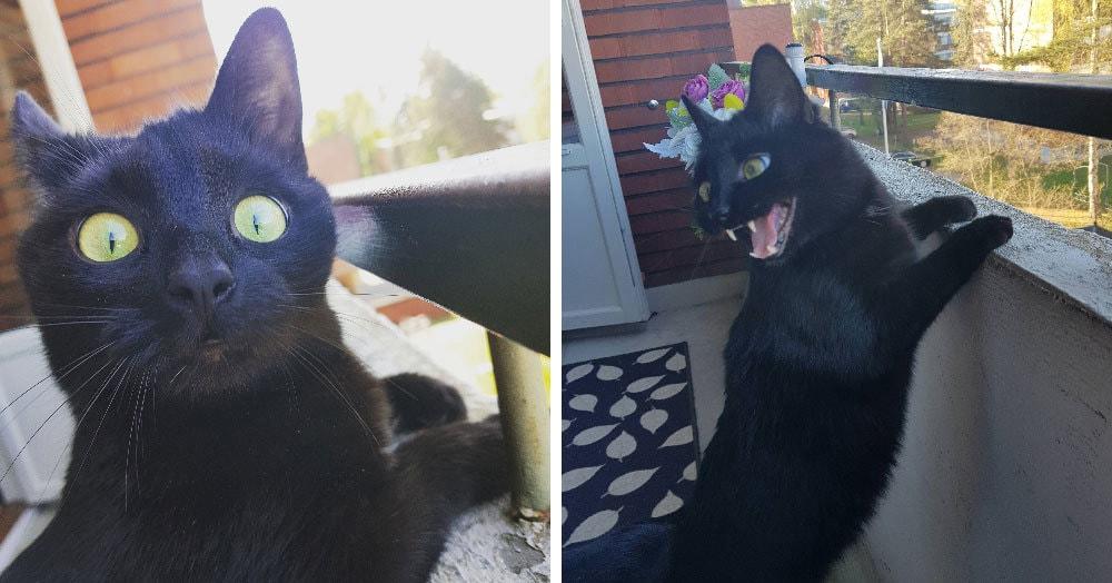 Хозяйка запечатлела эмоции своего кота, когда он впервые увидел улицу, и его морда говорит сама за себя