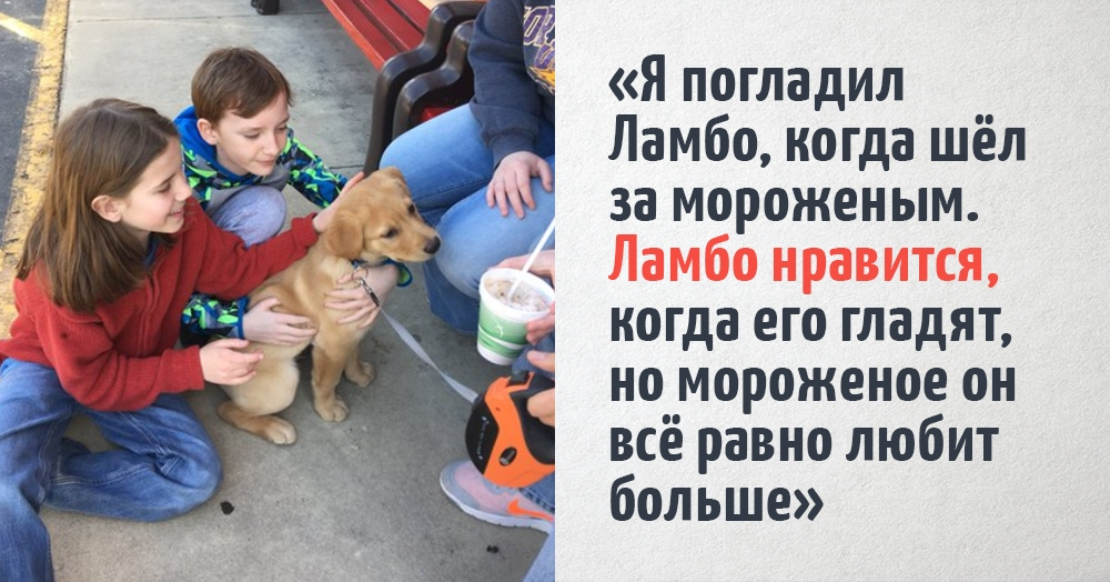 Мальчик просто ведёт блог о том, как он гладит собак. Но получается у него чертовски интересно!