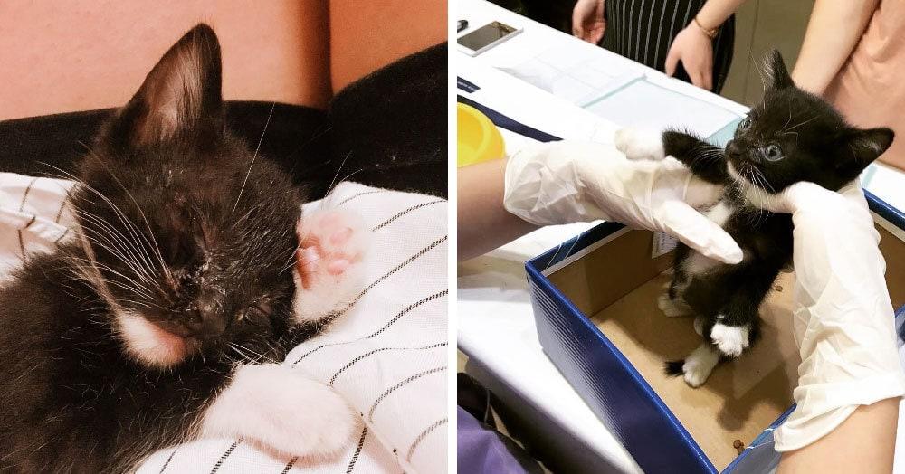 Девушка приютила больного бездомного котёнка, а спустя год его было уже не узнать