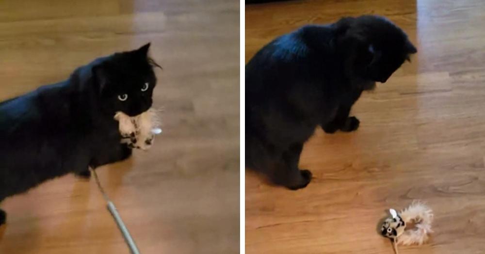 Кот поймал мышь, а потом понял, что это просто игрушка и его всю жизнь обманывали. Его реакцию надо видеть