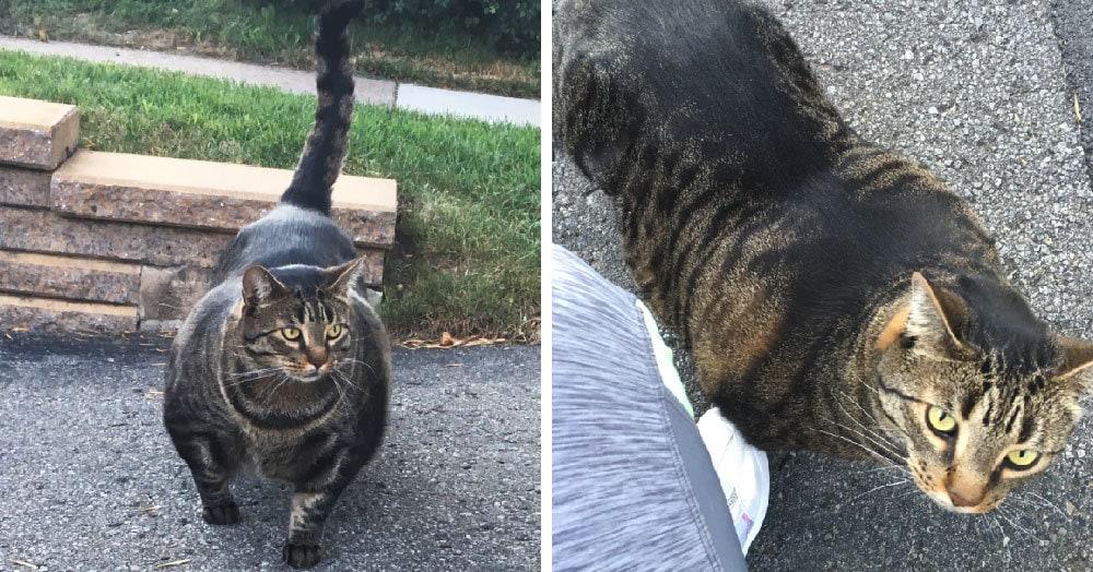 Девушка поделилась в сети фотографией невероятно мускулистого кота. И причина его габаритов вовсе не еда